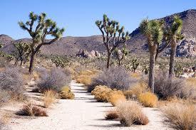 Desert path 1